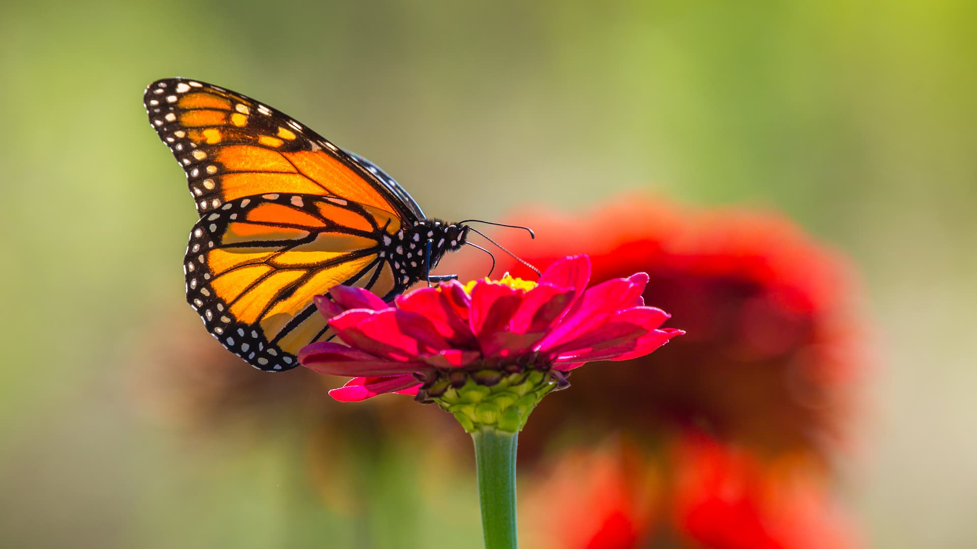 A butterfly alights on a flower during a SASS-sponsored gleaning trip. Photo by Mike Cohea.